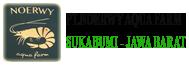 logo noerwy